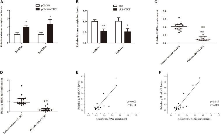 CTCF alters histone H3K9ac and H3K14ac levels in the p53 promoter. (A,B) ChIP-qPCR analysis of the enrichment of histone H3K9ac and H3K14ac levels in the p53 promoter region in normal CD4 + T cells transfected with pCMV6-CTCF (A) or pRS-CTCF (B) . Values are relative to those obtained with input DNA prepared from untreated chromatin. Data are mean ± SD from three independent experiments. (C,D) ChIP-qPCR analysis of the enrichment of histone H3K9ac (C) and H3K14ac (D) levels in the p53 promoter region in CD4 + T cells from patients with aGVHD ( n = 15) and individuals without aGVHD ( n = 15). Values are relative to those obtained with input DNA prepared from untreated chromatin. (E , F) Correlation analysis of H3K9ac (E) /H3K14ac (F) of p53 promoter and p53 expression in aGVHD CD4 + T cells ( n = 15). ∗ P