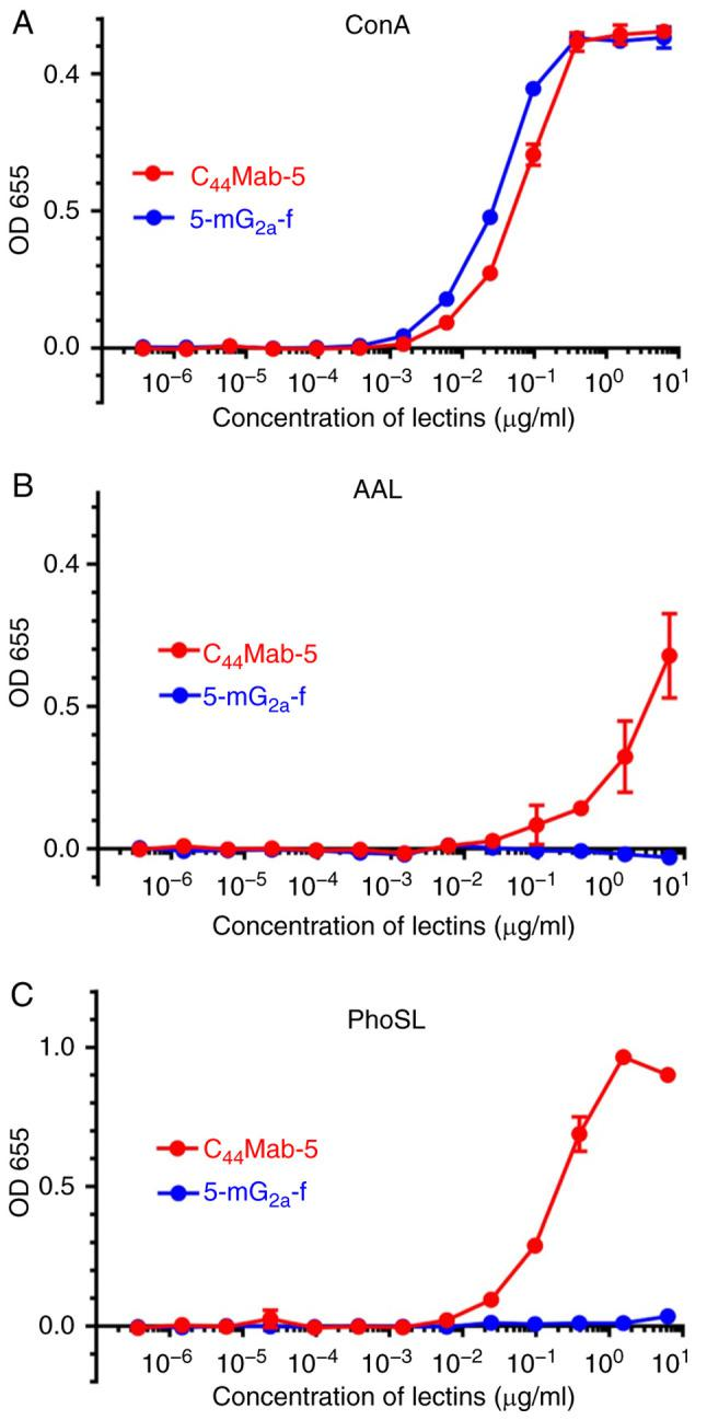 Confirmation of defucosylation of 5-mG 2a -f by enzyme-linked immunosorbent assay (ELISA) using lectins. (A) C 44 Mab-5 and 5-mG 2a -f were immobilized and incubated with biotin-labeled concanavalin A (Con A), followed by peroxidase-conjugated streptavidin. The enzymatic reaction was produced using a 1-Step Ultra TMB-ELISA. (B) C 44 Mab-5 and 5-mG 2a -f were immobilized and incubated with biotin-labeled Aleuria aurantia lectin (AAL), followed by peroxidase-conjugated streptavidin. The enzymatic reaction was produced using a 1-Step Ultra TMB-ELISA. (C) C 44 Mab-5 and 5-mG 2a -f were immobilized and incubated with biotin-labeled Pholiota squarrosa lectin (PhoSL), followed by peroxidase-conjugated streptavidin. The enzymatic reaction was produced using a 1-Step Ultra TMB-ELISA.