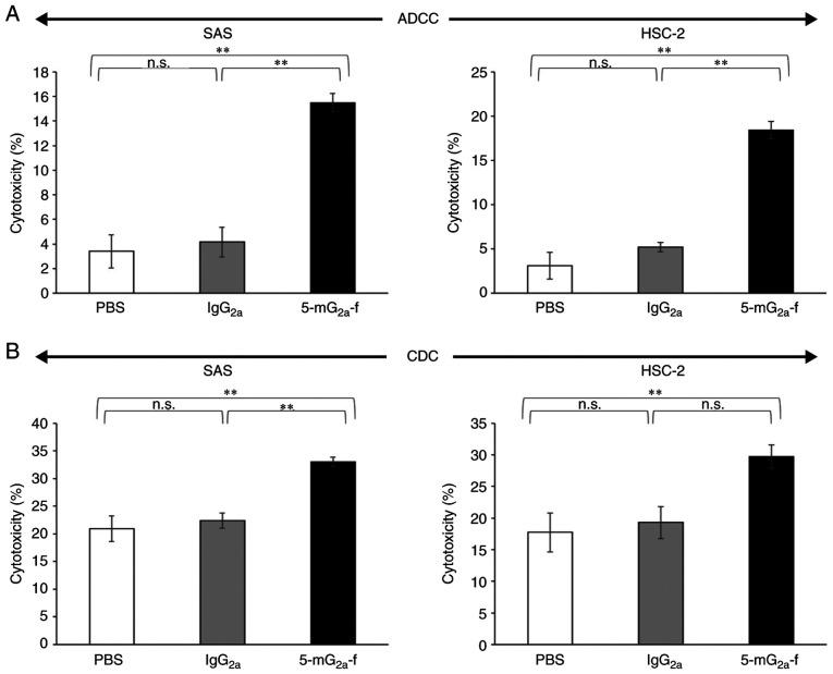 Evaluation of ADCC and CDC activities by 5-mG 2a -f. (A) ADCC activities by 5-mG 2a -f, control mouse IgG 2a , and control PBS in SAS and HSC-2 cells. (B) CDC activities by 5-mG 2a -f, control mouse IgG 2a , and control PBS in SAS and HSC-2 cells. Values are mean ± SEM. Asterisk indicates statistical significance (**P