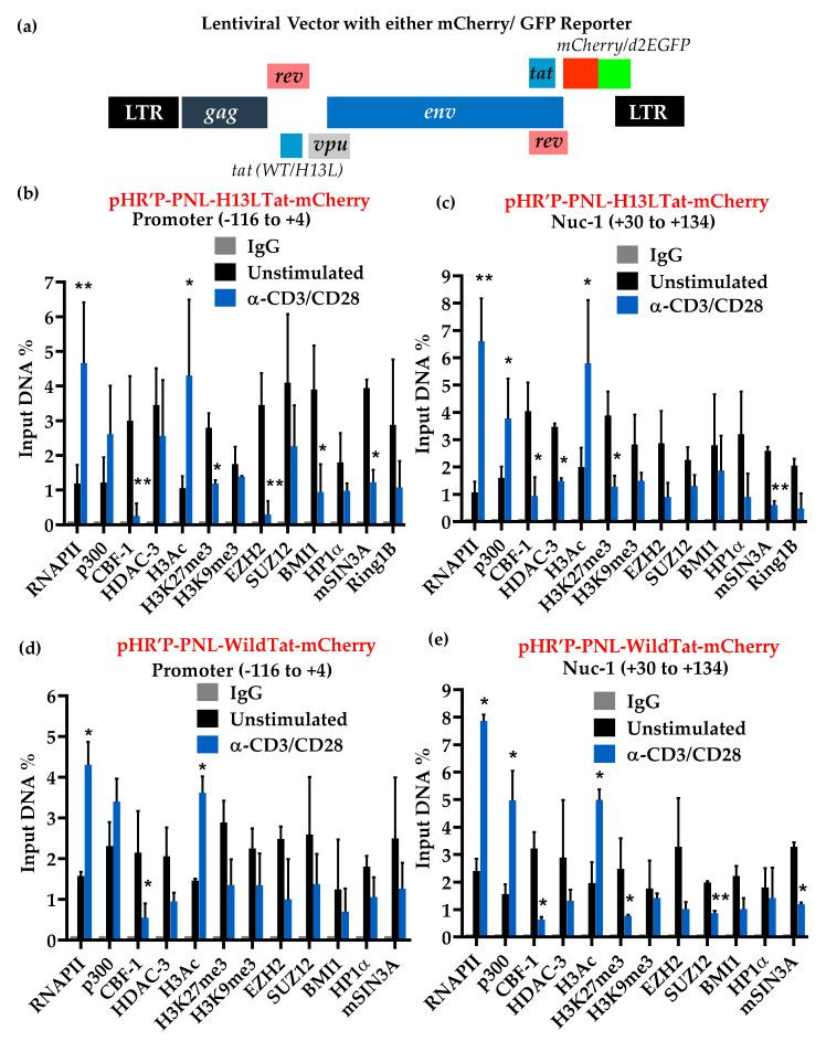 Cell activation leads to fluctuation in the levels of different chromatin-associated factors that belong to PRC1 and PRC2. ChIP analyses were performed before and after activation of latently infected primary CD4+ T cells with α-CD3/-CD28 antibodies, in the presence of IL-2 for 30 min. ( a ) Structure of lentiviral vectors. mCherry was used as reporter depicted in this diagram. ChIP results in latency systems harboring proviruses with the vector pHR'-PNL-H13LTat-mCherry ( b , c ), and pHR'-PNL-wild-typeTat-mCherry ( d , e ). Error bars represent the SEM of two independent experiments and three separate qPCR measurements from each analysis. Graphs represent the average and standard deviation from three independent and replicate samples. Statistical analysis was calculated with GraphPad Prism 5.0 (GraphPad Software, San Diego, CA, USA). The p value of statistical significance was set at either; p