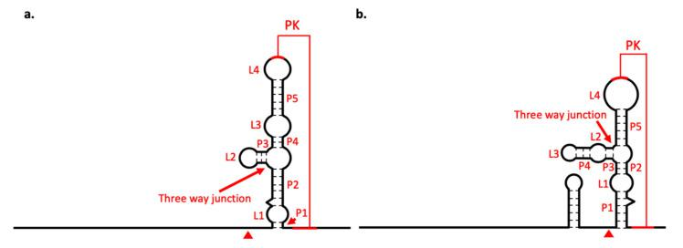 Diagrams of xrRNA structure. xrRNA structure of ( a ) BJV and ( b ) BJLV. Arrows indicate the three-way junction structure and arrowheads indicate Xrn1 stop point; PK: pseudoknot.