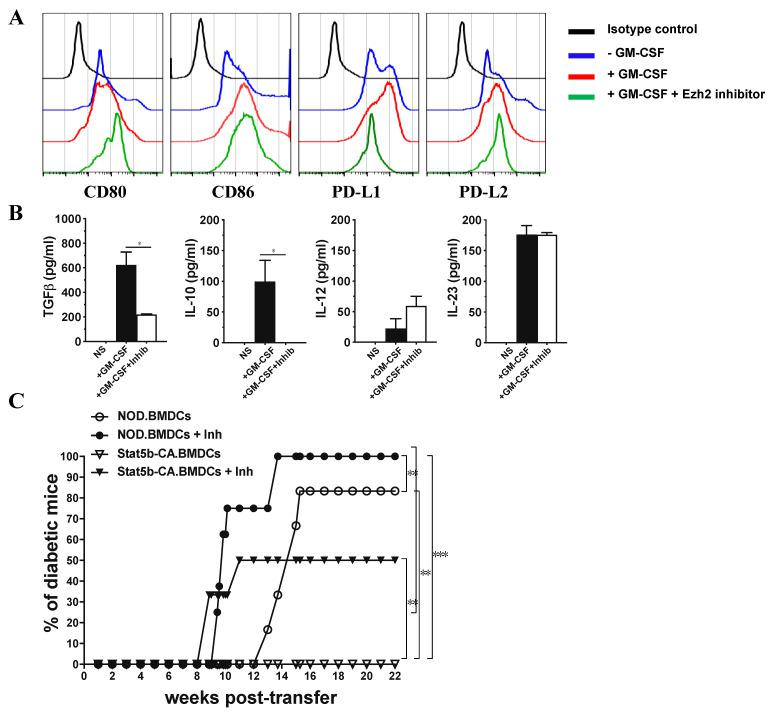 Inhibition of Ezh2 in Stat5b-CA-expressing BMDCs disturbs their tolerogenic signature and their capacity to protect against diabetes in NOD mice. ( A , B ) Stat5b-CA.BMDCs were pre-incubated for 1 h with the Ezh2 inhibitor GSK343 (3 µM) or vehicle (0.1% DMSO), then cultured for 48 h in the absence or presence of GM-CSF (50 ng/mL) and analyzed for ( A ) the expression of CD80, CD86, PD-L1, and PD-L2 by FACS and ( B ) production of cytokines (TGFβ, IL-10, IL-12, and IL-23) by ELISA. ( C ) BMDCs derived from NOD or NOD.CD11c Stat5b-CA mice were cultured in vitro with Ezh2 inhibitor GSK343 (3 µM) or vehicle (0.1% DMSO). DCs were washed and i.v. injected (10 7 cells/mouse) to 8-week-old female NOD mice (6 mice per group). Recipient NOD mice were followed for diabetes development until 26 weeks (22 weeks post-injection) of age. The asterisks indicate statistically significant differences determined by one-way ANOVA with Tukey's post-test. p