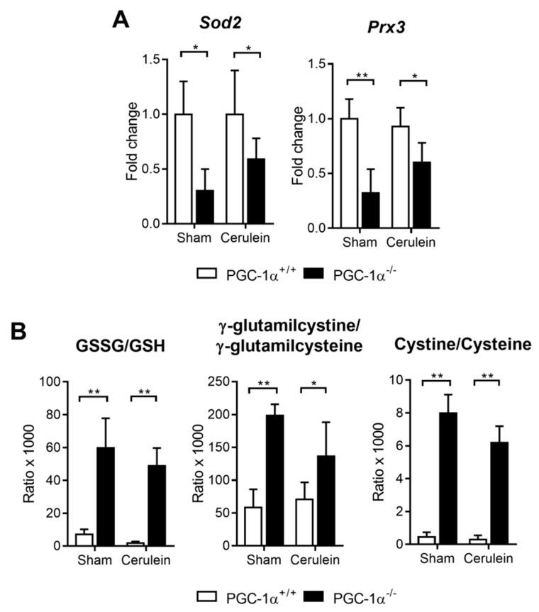 ( A ) mRNA relative expression of Sod2 and Prx3 versus the Tbp (TATA-binding protein; housekeeping) in the livers of the sham PGC-1α +/+ (WT) and PGC-1α -/- (KO) mice and at 1 h after cerulein-induced AP (Cerulein). ( B ) The GSSG/GSH, g-glutamilcystine/g-glutamilcysteine and cystine/cysteine ratios in the livers of the sham PGC-1α +/+ (WT) and PGC-1α -/- (KO) mice and at 1 h after cerulein-induced AP (Cerulein). There were six mice per group. The statistical difference is indicated as * p