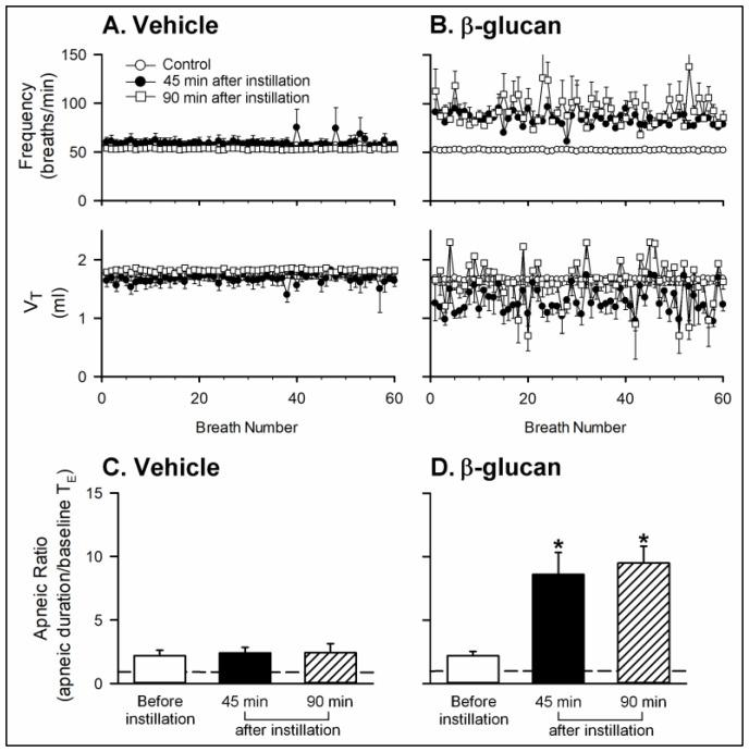 Effects of intratracheal instillation of β-glucan or its vehicle on the baseline breathing pattern and apneic response to right-atrial injection of capsaicin in two groups of anesthetized, spontaneously breathing rats. ( A , B ): effects of intratracheal instillation of vehicle or β-glucan on the baseline frequency and V T , respectively; ( C , D ): effects of intratracheal instillation of vehicle or β-glucan on the apneic responses to capsaicin injection, respectively. The apneic ratio was defined as the apneic duration occurring during 20 s after the capsaicin injections divided by the baseline expiratory duration (T E ). Data are means ± SE ( n = 6). One-way ANOVA followed by Newman-Keuls post hoc test: *, significantly different from before instillation ( p