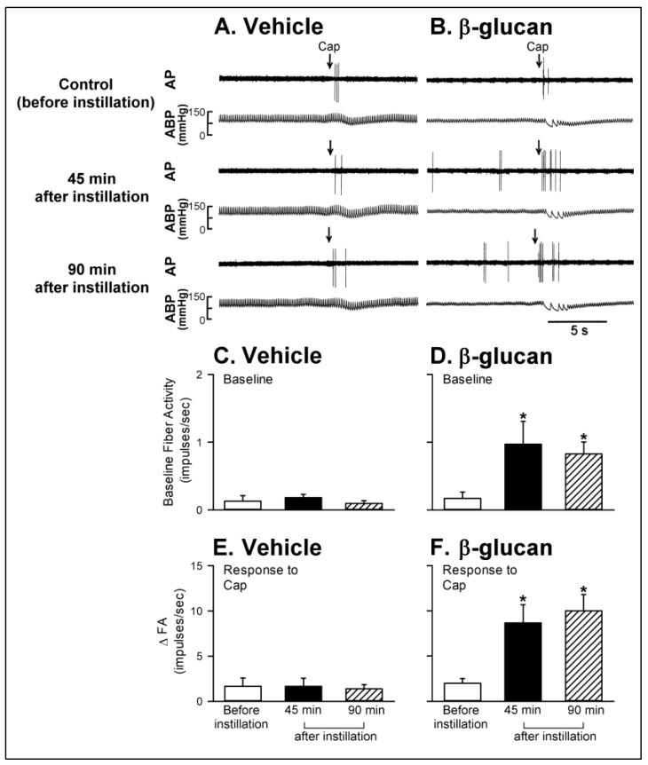 Experimental records illustrating the responses of capsaicin-sensitive lung vagal (CSLV) afferents to right-atrial injection of capsaicin (Cap, 0.75 μg/kg; arrows) before, 45 min after, and 90 min after intratracheal instillation of vehicle or β-glucan in anesthetized, artificially ventilated rats. ( A , B ): intratracheal instillation of vehicle or β-glucan (5 mg/0.1 mL/rat) in two anesthetized, artificially ventilated rats (vehicle: 350 g; β-glucan: 355 g), respectively. AP, action potential; ABP, arterial blood pressure. ( C , D ): the effects of vehicle and β-glucan on the baseline fiber activity of CSLV afferents, respectively. ( E , F ): the effects of vehicle and β-glucan on the responses of CSLV afferents to the capsaicin injection, respectively. FA, fiber activity; ∆FA, increase in the fiber activity was measured as the difference between peak FA (averaged over 3-s intervals) and the baseline FA (averaged over 10-s intervals) in each CSLV afferent. Data are means ± SE ( n = 8). One-way ANOVA followed by Newman-Keuls post hoc test: *, significantly different from before instillation ( p