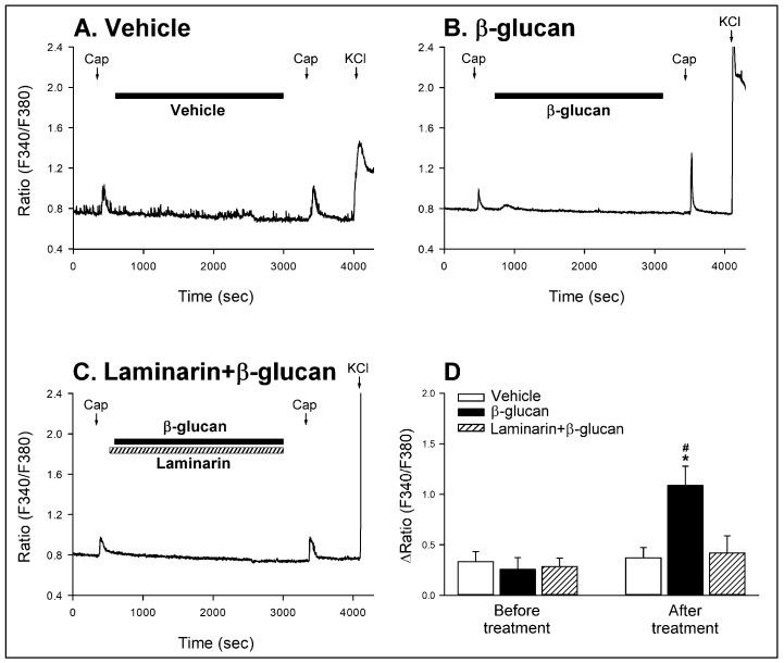 Experimental records illustrating the potentiating effect of β-glucan on capsaicin-evoked Ca 2+ transients and the role of Dectin-1 receptors in this potentiating effect of β-glucan in isolated CSLV neurons. ( A , B ): perfusion with vehicle (ECS; filled horizontal bar) or β-glucan (200 μg/mL, 40 min; filled horizontal bar), respectively. Capsaicin (Cap, 0.1 μM, 30 s; arrows) was applied before and 5 min after the β-glucan or its vehicle perfusion, and a KCl solution (60 mM, 30 s; arrows) was applied to test the cell viability at the end of the experiment. ( C ): treatment with Laminarin (100 μg/mL, 41 min; hatched horizontal bar) + β-glucan; Cap was applied before and 5 min after Laminarin + β-glucan. ( D ): the role of Dectin-1 receptors in the potentiating effect of β-glucan on capsaicin-evoked Ca 2+ transients in isolated CSLV neurons. An increase in 340/380 ratio [∆Ratio (F340/F380)] was measured as the difference between the peak amplitude of Ca 2+ transients (4-s average) and the 30-s average at baseline. Data are means ± SE ( n = 22). Two-way ANOVA followed by Newman-Keuls post hoc test: *, significantly different from vehicle ( p