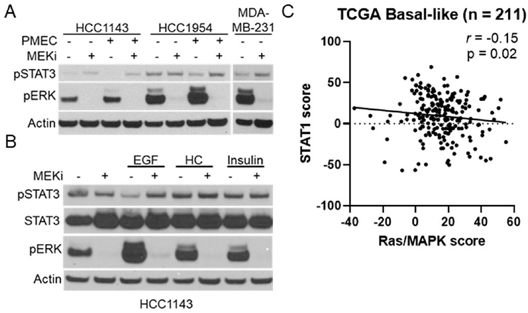 MAPK signaling and STAT activation are inversely correlated in human TNBC cell lines and basal-like patient samples. A: immunoblot analysis of <t>HCC1143,</t> HCC1954, and MDA-MB-231 cells grown in either base media or PMEC media treated with or without trametinib (50 nM; MEKi) for 48 h prior to lysis; B: immunoblot analysis of HCC1143 cells grown in RPMI media supplemented with EGF (20 ng/mL), hydrocortisone (0.5 μg/mL), or insulin (10 μg/mL) along with being treated with or without trametinib (50 nM; MEKi) for 48 h prior to lysis; C: transcriptional analysis of STAT1 and Ras/MAPK scores for 211 Basal-like breast cancers. MAPK: mitogen activated protein kinase; TNBC: triple negative breast cancer; MEKi: MEK inhibition