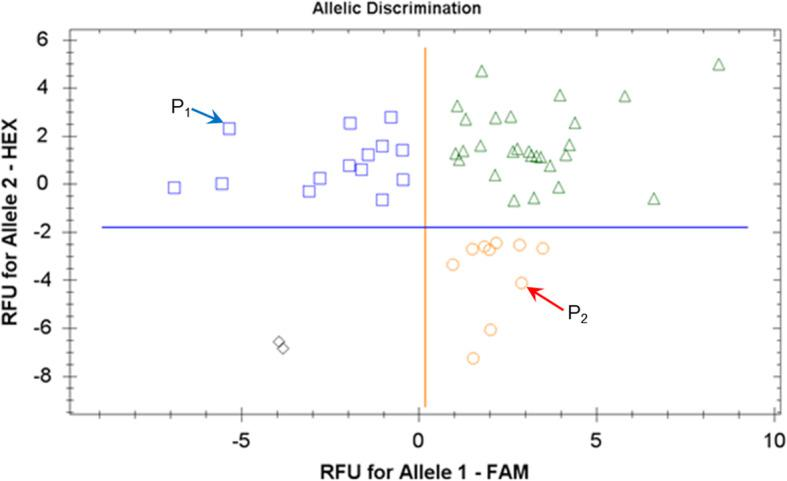 Allele discrimination for the Amplifluor-like SNP marker KATU-B30. Fifty F 3 breeding lines from the segregating population Granal × Baisheshek were used. Parental genotypes are designated as: ♀ P 1 , Granal, and ♂ P 2 , Baisheshek. Relative Fluorescence Units (RFU) for fluorophores FAM and HEX were transformed automatically into genotyping of alleles 1 and 2, respectively, using a BioRad CFX96 Real-Time PCR Detection System Instrument