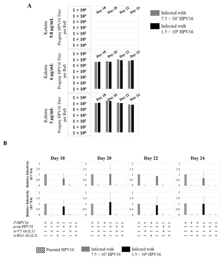 Extended culturing of Kaletra treated HPV16 infected cervical tissues modulates progeny virus titers. ( A ) Raft tissues (day 18–24) infected with two virus doses modulates prog -HPV16 titers in a Kaletra concentration dependent manner. Grey bars: infected with 7.5 × 10 7 P -HPV16 virions; Black bars: infected with 1.5 × 10 8 P -HPV16 virions. ( B ) Infectivity of concentrated virus stocks isolated from raft tissues treated with Kaletra (3 µg/mL) compared with P -HPV16 (1 MOI in HaCaT cells), and infection inhibition using α-V5 and α-RG1 monoclonal antibodies. Infection results shown are average of three experiments and is presented as mean ± SD. p -values were calculated using two-tailed Student's t -tests. Infectivity of prog -HPV16 were not significantly different compared with P -HPV16.