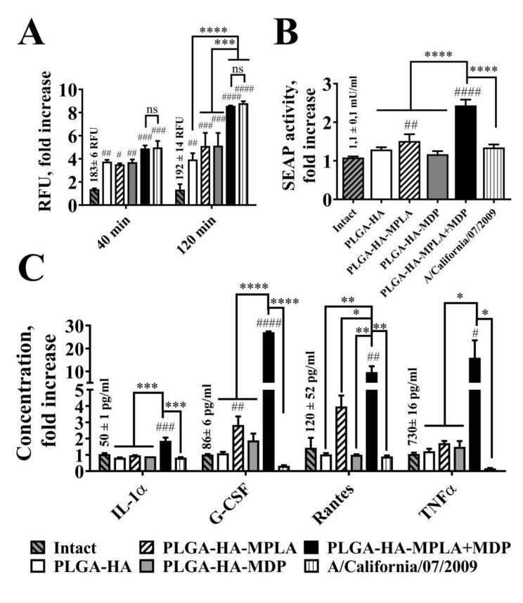 Phagocytosis rate and cell response after the addition of equal amounts of PLGA NPs and H1N1 influenza viral particles to RAW-Blue cells. ( A ) Phagocytosis quantification of PLGA NPs and H1N1 influenza viral particles. RAW-Blue cells were seeded in 96-well plate at 2 × 10 5 cells per well in complete RPMI medium. The next day, normalized to 10 10 particles/well PLGA (roughly equal to 100µg/ml) and virus particles were added to the cells. The medium was removed at the indicated time points, the cells were washed with PBS, and the integral fluorescence (RFU) of each well was determined using a Biotek reader. Mean values (indicated above the bars) of intact cells were taken equal to 1 (100%). Data represent the mean ( n = 3) fold increase over intact cells ± SD. ( B ) NF-κB/AP-1-dependent SEAP reporter gene expression in cell-free culture supernatants from RAW-Blue cells treated for 18 h with PLGA and with virus particles normalized by quantity (10 10 particles/well). Mean values (indicated above the bars) of intact cells were taken equal to 1 (100%). Data represent the mean ( n = 3) fold increase over intact cells ± SD. ( C ) Cytokine levels were measured in cell-free culture supernatants from the same wells using bead-based immunoassay. Bars represent mean fold increase ± SD (whiskers) over intact group. Values (mean concentrations ± SD are indicated above the bars) of intact groups were taken equal to 1 (100%). Significant differences between treated and intact cells are indicated by hashes: # for p