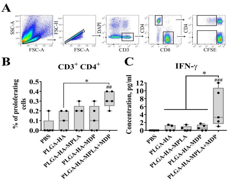 PLGA <t>NPs</t> containing both MPLA and MDP induce stronger antigen-specific CD4+ T-cell response in mice than NPs containing individual PRR agonists. C57BL/6 mice ( n = 5/group) were i.m. immunized three times with PLGA NPs: PLGA-HA, PLGA-HA-MPLA, PLGA-HA-MDP, and PLGA-HA-MPLA + MDP with a two-week interval. Non-immunized control mice received <t>PBS.</t> Splenocytes were harvested from mice 14 days after the last immunization. Splenocytes were stained with CFSE, treated with whole hemagglutinin (1 μg/mL). 72 h after cell were harvested for cellular proliferation analysis, cell culture was collected for IFN-γ detection. ( A ) Gating strategy for assessment of proliferating T cells in culture. Single lymphocytes were gated using the forward and side scatter characteristics. Live (DAPI negative) CD3 + T cells were then obtained from the single cells gate. CFSE dim cells were gated in each CD3 + CD4+ as well as CD3 + CD8+ populations. ( B ) % of proliferating CD4 + T-cells (referred to fraction diluted) in response to hemagglutinin restimulation. ( C ) IFN-γ levels in supernatants from HA-stimulated spleen cells, determined by a bio-plex assay 72 h after restimulation. Boxes show interquartile range, whiskers show range, and horizontal lines represent median values. Dots show individual data points. Significant differences ( p