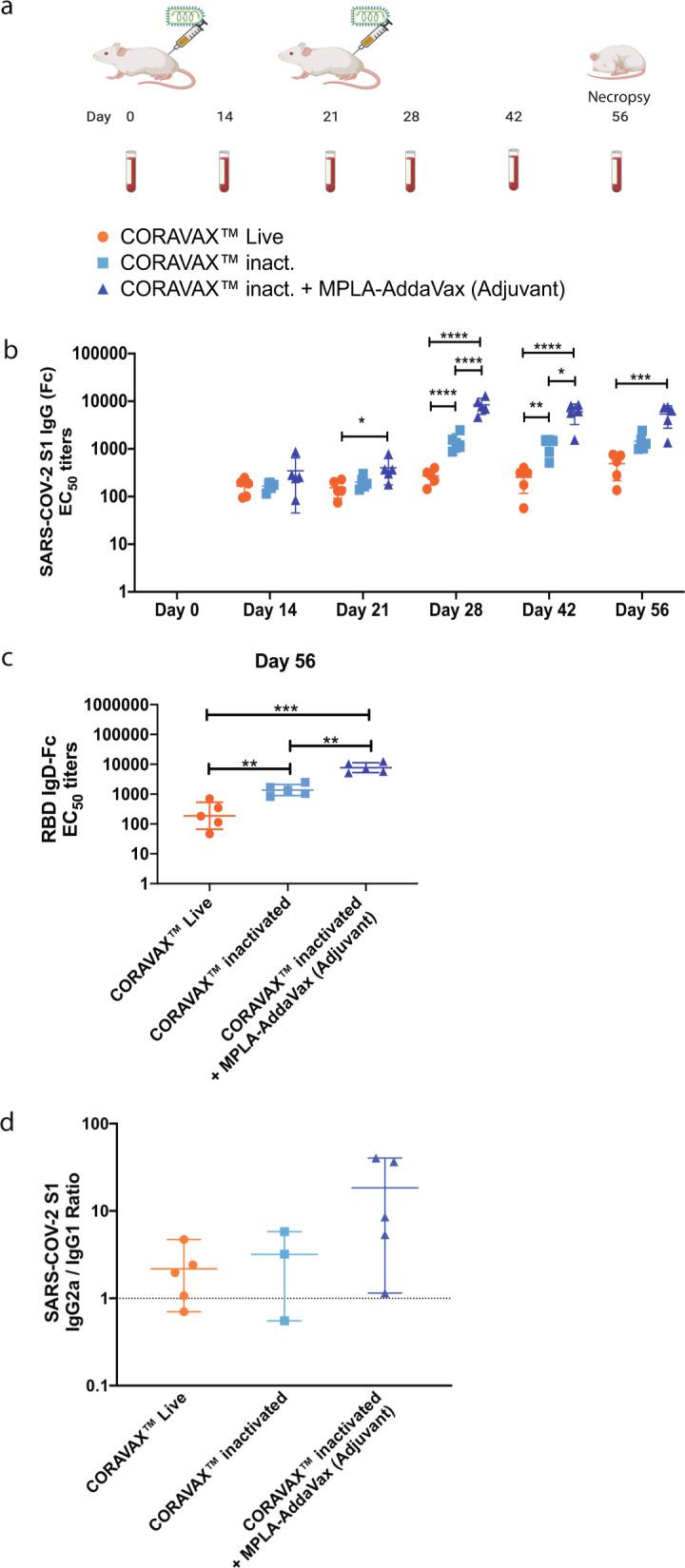 Analysis of the immune response to CORAVAX in mice. Balb/C mice were immunized once with live CORAVAX or twice (days 0 and 21) with 10 μg chemically inactivated particles of CORAVAX with or without adjuvant. Serum was collected from each mouse at days 14, 21, 28, 42, and 56 for analysis by a SARS-CoV-2 S-specific ELISA. a Immunization schedule: live CORAVAX used once on day 0; the inactivated vaccines were dosed on days 0 and 28 (figure created with BioRender.com). b SARS CoV-2 S1 <t>IgG</t> responses represented as EC50 titers c SARS CoV-2 RBD IgG responses on day 56 sera d SARS CoV-2 S1 <t>IgG2/1</t> isotype ratio. Two animals in the inactivated CORAVAX group did not make detectable <t>IgG1</t> antibodies.