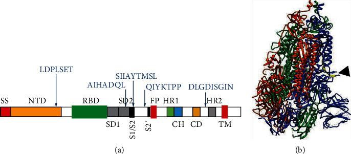 Schematic illustrations of SARS-Cov-2 S protein. (a) Locations of IgY-S epitopes in SARS-Cov-2 S. Locations of the five identified IgY-S epitopes are indicated by arrows. SS: signal sequence; NTD: N-terminal domain; RBD: receptor-binding domain; SD1: subdomain 1; SD2: subdomain 2; S1/S2: S1/S2 cleavage region; S2′: S2′ cleavage region; FP: fusion peptide; HR1: heptad repeat 1; CH: central helix; CD: connector domain; HR2: heptad repeat 2. (b) 3D view of SARS-CoV-2 S trimer based on PDB 6VXX [ 37 ], constructed by UCSF Chimera. The S1/S2 cleavage site is indicated by an arrowhead. The yellow strand represents a peptide containing epitope SIIAYTMSL.