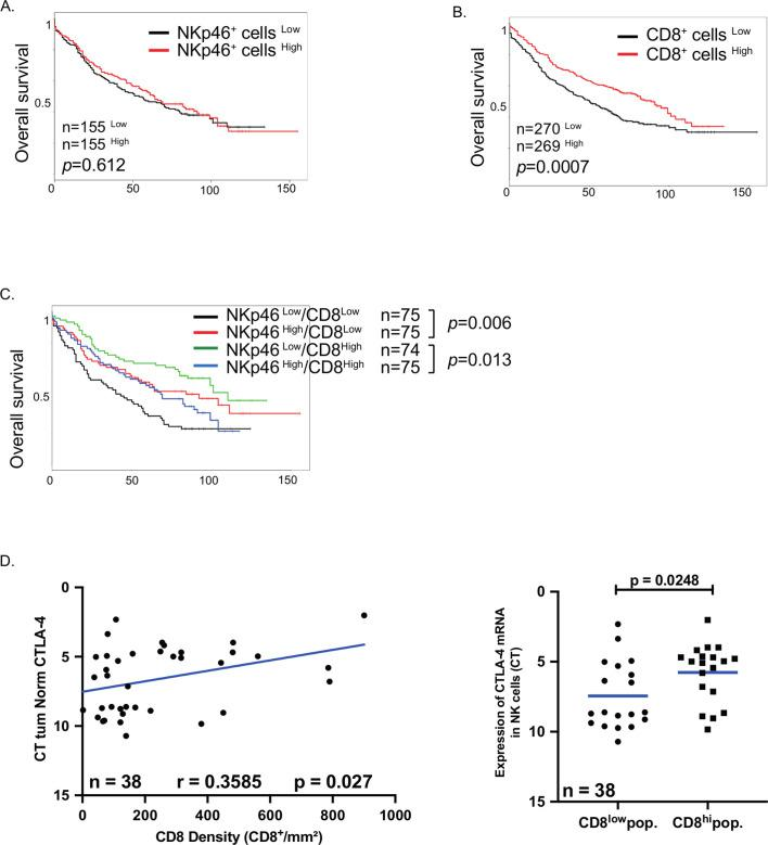 Clinical impact of NKp46 + cells in patients with non-small cell lung carcinoma. (A, B) Patients from the retrospective cohort (cohort 3) were splitted into two groups according to the density of intratumoral NKp46 + cells (A) or CD8 + cells (B). Separation was done by median and their overall survival was analyzed. (C) Patients with low density (CD8 + cells Low ) or high density (CD8 + cells High ) of CD8 + cells were splitted into two groups according to their number of intratumoral Nkp46 + cells and the overall survival were done in each group. Separation was done by median. (D, E) CD8 density of patients from the validation cohort (cohort 2) was assessed by immunohistochemistry on paraffin-embedded slides and the correlation with cytotoxic T-lymphocyte-associated protein 4 (CTLA4) mRNA expression in natural killer (NK) cells was calculated using Pearson correlation test with the GraphPad software (D). (E) Patients from validation cohort (cohort 2) were split in two groups according to the density of intratumoral CD8 + cells (using median) and the expression of CTLA4 mRNA was analyzed in each group. Statistical analyses were performed by the Mann-Whitney non-parametric test with the GraphPad software.
