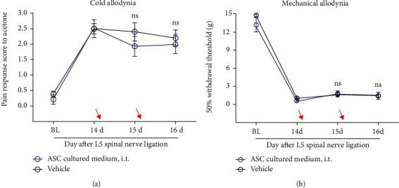 Absence of the analgesic effect following the injection of ASC-derived culture medium on the rat model with L5 spinal nerve ligation. (a, b) No effects observed on mechanical allodynia (a) and cold allodynia (b) by treatment with ASC-derived culture medium after the L5 spinal nerve ligation surgery. Arrows indicate time of injection (POD 14, POD 15). p > 0.05, compared with vehicle (30 μ l DMEM); n = 5 − 7 rats/group. p > 0.05, compared with POD14. All data are expressed as the mean ± SEM. Statistical significance was determined by 2-way ANOVA, followed by Sidak's posthoc test. ns: not significant; POD: postoperative day; BL: baseline; i.t.: intrathecal injection; ASC: adipose tissue-derived stem cell; DMEM: Dulbecco's modified Eagle's high-glucose medium.