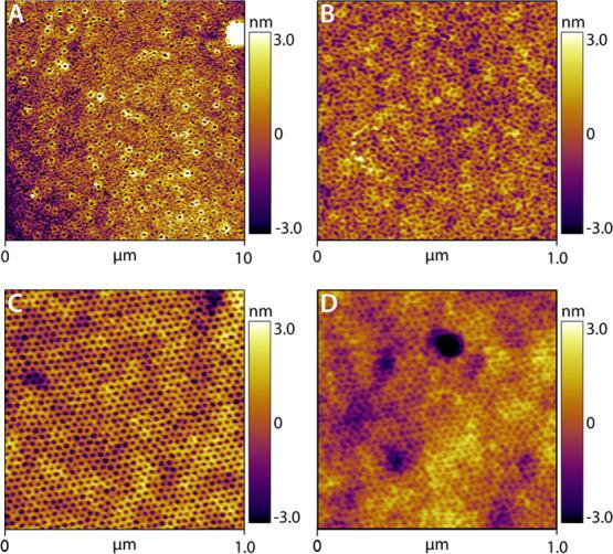 AFM topography profile of a PS- b -PEO thin film co-assembled with lysozyme–poly(ethylene glycol) (PEG) before SVA (A, B). AFM topography profiles of PS- b -PEO thin films without (C) and with (D) lysozyme–PEG after SVA.