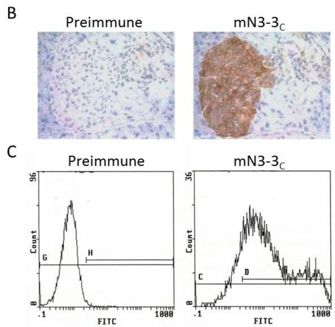 """Specificity of the guinea pig anti-mouse NTPDase3 antibody mN3-3 c . ( A ) Strong signals in immunocytochemistry of transfected COS-7 cells with a plasmid encoding mouse NTPDase3 (mN3) are only detected with antiserum mN3-3 c (rabbit """"12"""" in Figure 1 D). No signals are detected with the pre-immune serum or with the anti-serum on un-transfected cells (COS-7). ( B ) Immuno- histochemistry of serial sections from a mouse pancreas. The antiserum displays a positive reaction on the cells of the Langerhans islets. ( C ) Flow cytometry of transfected HEK 293T cells with a plasmid encoding mouse NTPDase3 shows a rightward shift (right panel) when compared to its pre-immune control (left panel). Nuclei were stained in blue with hematoxylin ( A , B )."""