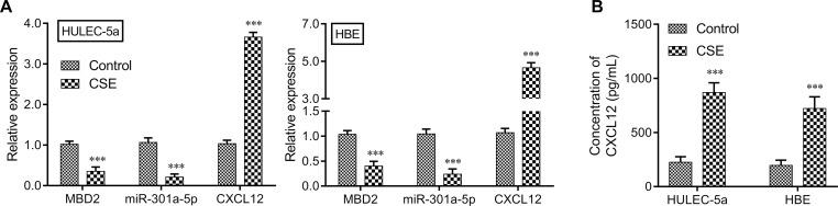 The effects of CSE on MBD2, miR-301a-5p, CXCL12, and CXCR4 expression in vitro. HULEC-5a or HBE cells were treated with CSE. The levels of MBD2, miR-301a-5p, and CXCL12 expression in ( A ) HULEC-5a and ( B ) HBE cells were measured by the qRT-PCR. The extracellular CXCL12 concentration in medium was determined by ELISA Data are expressed as the mean ± SD. *** P