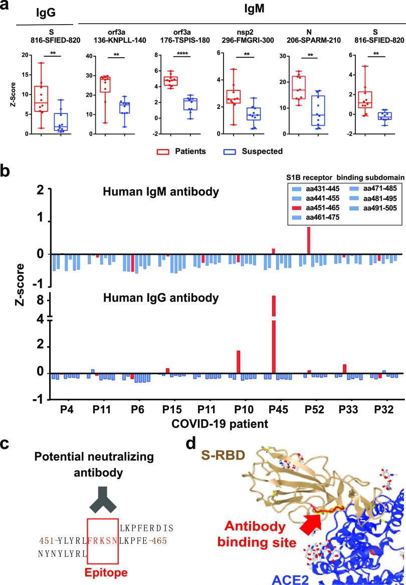 Identification of potential peptide epitopes for SARS-CoV-2 detection and neutralization. (a) Box-plot analysis of antibody responses to immunogenic epitopes of SARS-COV-2 between COVID-19 patients and control patients. The significance was performed using the Mann–Whitney U-test ( p -value