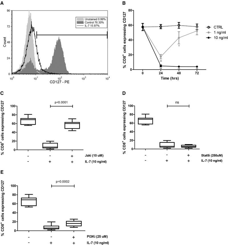 IL‐7‐induced downregulation of mCD127 is dependent on JAK and PI3K but not STAT5. CD8 + T cells were magnetically isolated from PBMCs derived from healthy individuals and cultured with or without IL‐7. For some experiments, inhibitors were used as described. Flow cytometry was performed to evaluate expression of CD127. (A) Representative flow cytometry histogram showing the CD127 median fluorescence intensity (MFI) and the percentage of CD127 + cells among unstained cells (light gray), medium control (dark gray), and the IL‐7‐ (10 ng/mL) treated cells (black unfilled). The gating strategy is shown in Supporting Information Fig. S6. (B) Time course of CD127 expression on CD8 + cells with media control (dotted line), 1 ng/mL IL‐7 (gray line), and 10 ng/mL IL‐7 (black line). Significance was calculated between each IL‐7 concentration in relation to the medium control (* p