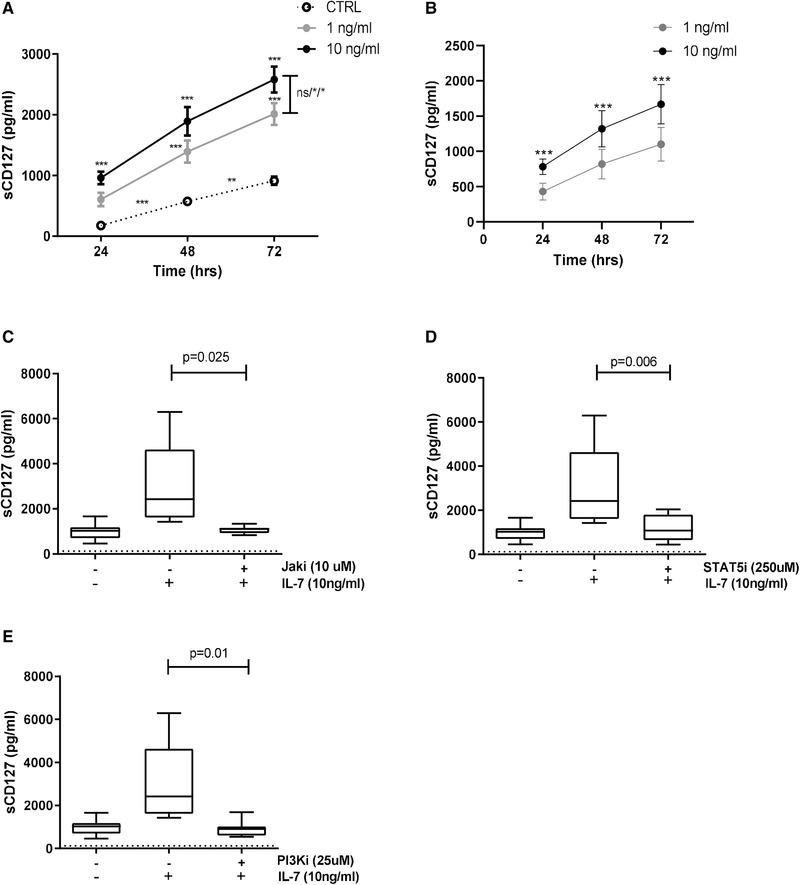 IL‐7‐induced sCD127 release from CD8 + T cells involves JAK, STAT5, and PI3K. CD8 + T cells were magnetically isolated from PBMCs derived from healthy individuals and cultured with or without IL‐7. For some experiments, inhibitors were used as described. ELISA assays were performed to evaluate secretion of sCD127. (A) sCD127 release with media alone (dotted line), 1 ng/mL IL‐7 (gray line), and 10 ng/mL IL‐7 (black line) over time. sCD127 release was compared in the different time points between media alone and 1 ng/mL IL‐7 or media alone and 10 ng/mL IL‐7 (two‐way ANOVA with Bonferroni posttest); between 1 ng/mL IL‐7 and 10 ng/mL IL‐7 on each time point (two‐way ANOVA with Bonferroni posttest); and between the time points in the media alone (one‐way ANOVA with Bonferroni post‐test), n = 4. Data are shown as mean ± SEM of four samples from two independent experiments. (B) sCD127 release was normalized to the control values (values obtained in the media alone cell cultures were subtracted) and compared between cells treated with 1 ng/mL IL‐7 (grey line) or 10 ng/mL IL‐7 (black line) over time (two‐way ANOVA with Bonferroni posttest), n = 4. Data are shown as mean ± SEM of four samples from two independent experiments. (C) The impact of JAK inhibitor (10 μM), (D) STAT5 inhibitor (250 μM), and (E) PI3K (25 μM) inhibitor in the IL‐7‐induced sCD127 secretion in 48 h (paired t test), n = 7. Graphs show the distribution of seven samples from four independent experiments. The dotted line represents the limit of detection for this assay (125 pg/mL) (* p
