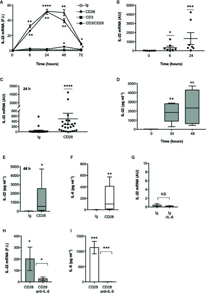 IL-22 regulation by CD28 autonomous stimulation in human CD4 + T cells. (A) CD4 + T cells were stimulated for indicated times with 2 μg ml −1 isotype control (Ig) or anti-CD28.2 or anti-CD3 (UCHT1) or anti-CD3 plus anti-CD28.2 Abs. IL-22 mRNA expression was measured by real-time PCR and values, normalized to GAPDH, expressed as fold induction (F.I.) over the basal level of cells stimulated with isotype control Ig. Data show the mean ± SEM of one out of three HD subjects. Statistical significance was calculated by Student t test. (B) IL-22 mRNA levels of CD4 + T cells from HD (n = 7) stimulated for 0, 6, or 24 h with crosslinked anti-CD28.2 Abs. IL-22 mRNA levels were measured by real-time PCR and values, normalized to GAPDH, expressed as arbitrary units (AU). Data show the mean ± SEM and statistical significance was calculated by Mann-Whitney test. Mean values: 0 h = 8.5, 6 h = 329.6, 24 h = 1336. (C) IL-22 mRNA levels (AU) of CD4 + T cells from HD (n = 24) stimulated for 24 h with isotype control Ig or anti-CD28.2 Abs. Data show the mean ± SEM and statistical significance was calculated by Mann-Whitney test. Mean values: Ig = 38.1; CD28 = 496.7. (D) CD4 + T cells from HD (n = 6) were stimulated for 0, 24 or 48 h with isotype control or crosslinked anti-CD28.2 Abs. IL-22 levels in culture supernatant were measured by ELISA. Lines represent median values and statistical significance was calculated by Student t test. Median values: 0 h = 17.7 pg ml −1 , 24 h = 1840 pg ml −1 , 48 h = 2329 pg ml −1 . (E) CD4 + T cells from HD (n = 12) were stimulated for 48 h with isotype control Ig or anti-CD28.2 Abs. IL-22 levels in culture supernatant were measured by ELISA. Lines represent median values and statistical significance was calculated by Student t test. Median values: Ig = 14.4 pg ml −1 , CD28 = 545 pg ml −1 . (F) CD4 + T cells from HD (n = 8) were stimulated for 24 h with isotype control Ig or anti-CD28.2 Abs. IL-6 levels in culture supernatant were measured by ELISA. L