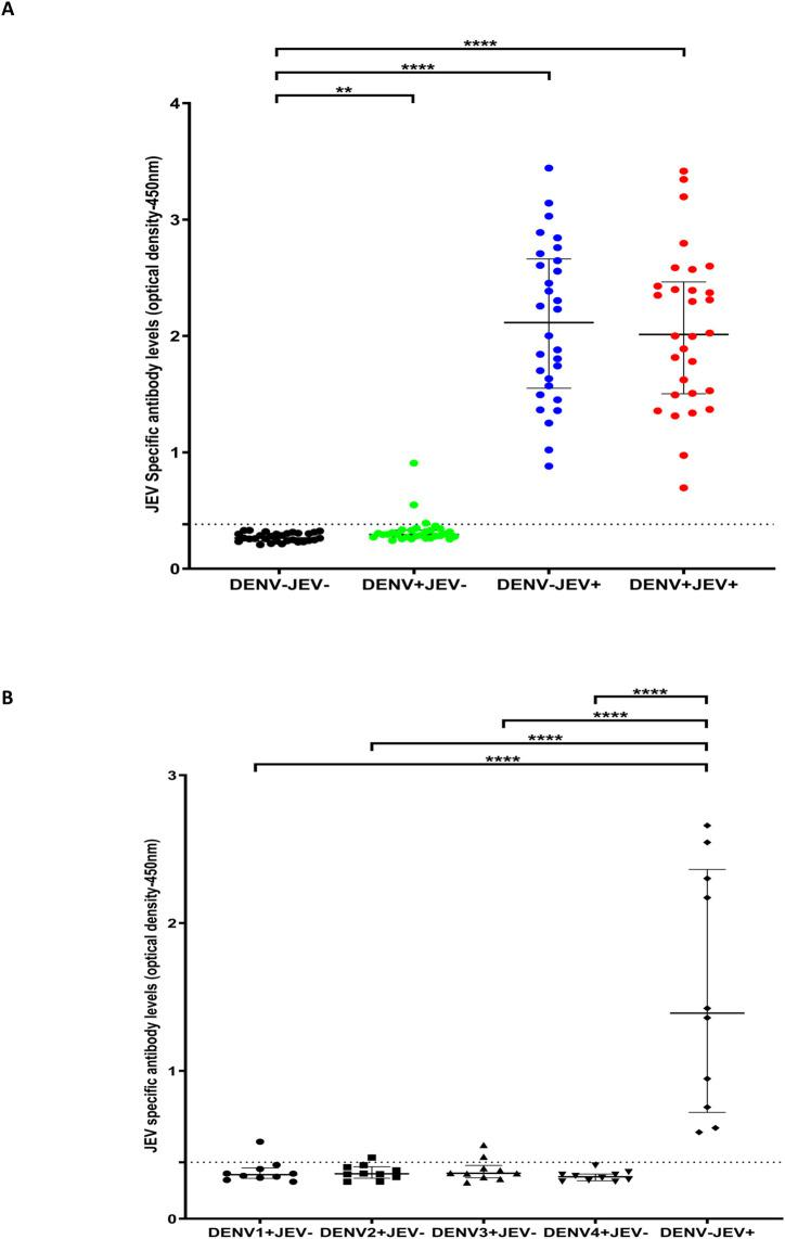 IgG antibody levels for a JEV-specific peptide pool in individuals with varied DENV and JEV seropositivity. Antibody responses were measured by ELISA to the JEV pool of peptides (P6, P7, P8, P9, P10, P12 and P13) in (A) those who were both JEV and DENV seropositive (JEV + DEV + , n = 30), JEV seropositive but seronegative for DENV (JEV + DEV - , n = 30), DENV seropositive but JEV seronegative (JEV - DENV + , n = 30) or seronegative for both (JEV - DENV - , n = 30). (B) Who were seronegative for JEV and previously had primary DENV infection due to either DENV1 (n = 10), DENV2 (n = 10), DENV3 (n = 10) or DENV4 (n = 10) and in individuals who were immunized for JEV but DENV seronegative (DENV - JEV + , n = 10) Error bars indicate the median and the interquartile range. The horizontal dotted line represents the cut-off value of 0.382, which was considered as the mean, ±3SD of the optical density of antibody levels in JEV - and DENV - seronegative individuals. *P