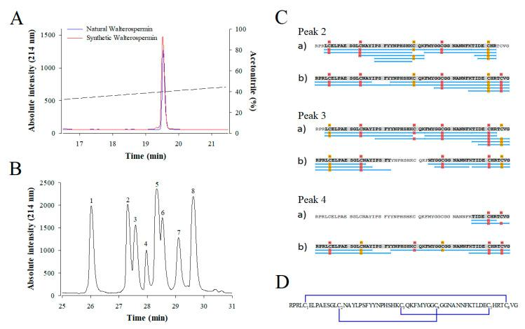 Coelution of synthetic and natural walterospermin and disulfide bridge assignment. ( A ) Coelution experiment. Natural (blue) and synthetic (red) walterospermin elution profiles are shown after separation on analytical RP-HPLC (AdvanceBio Peptide Map 2.1 × 250 mm, 2.7 µm from Agilent Technologies). The ACN gradient is shown as dashed line. ( B ) HPLC-UV (214 nm) trace of walterospermin after partial reduction and alkylation. Peak 1: folded walterospermin; peak 2-4: walterospermin with one reduced/alkylated bridge; peak 5–7: walterospermin with two reduced/alkylated bridge; peak 8: fully reduced/alkylated peptides. ( C ) Sequence coverage obtained by LC-ESI-MS(/MS) analyses of (a) tryptic and (b) chymotryptic digests of intermediates 2-4 containing N-propyl-maleimide (NPM) and N-ethyl-maleimide (NEM). Blue lines indicate peptide sequences analyzed. Yellow and red labels indicate NPM and NEM derivates, respectively. ( D ) Disulfide bridge arrangement of synthetic walterospermin. Cysteines were numbered by their order of appearance in the sequence. Underlined sequence corresponds to the active site of Kunitz-type protease inhibitors.