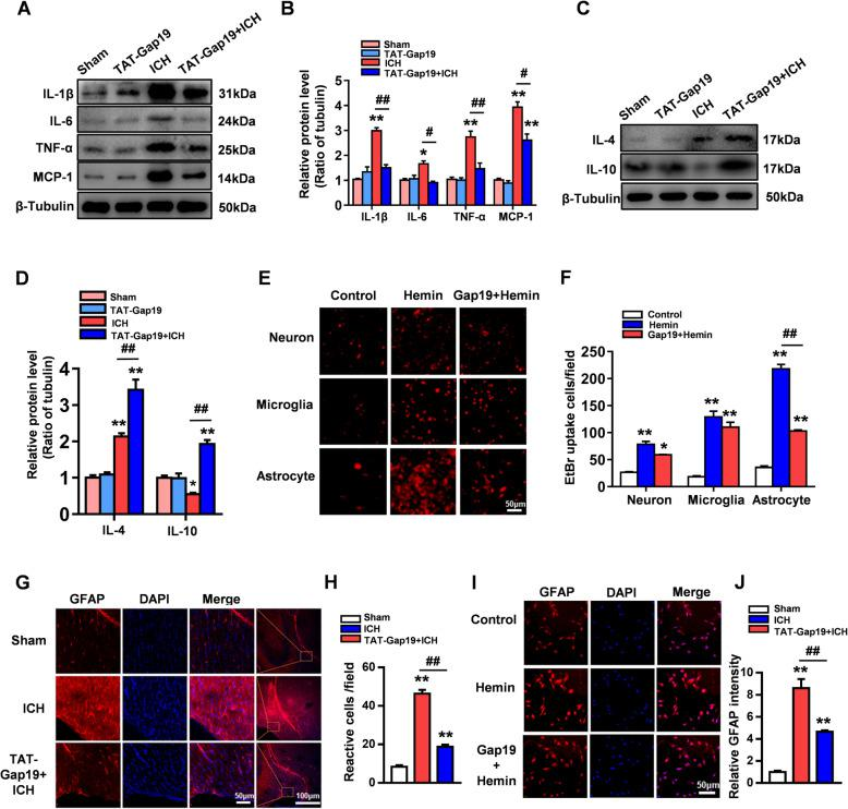 Gap19 reduces the expression of proinflammatory cytokines and the activation of astrocytes after ICH injury. a , b WB analysis showed the expression levels of TNF-α, IL-1β, IL-6, MCP1, and β-tubulin as the loading control. c , d The expression levels of IL-4 and IL-10. β-Tubulin was used as a loading control. e , f The EtBr uptake assay was used to evaluate the activity of Hcs on astrocytes, microglia, and neurons after hemin stimulation. Gap19 inhibits the hemin-induced excessive opening of Hcs on astrocytes. g , h Immunofluorescence for GFAP was used to evaluate astrocyte activation. TAT-Gap19 treatment significantly reduced the number of GFAP-positive cells in the area surrounding cerebral hemorrhage. i , j In vitro, Gap19 treatment reduced the GFAP fluorescence intensity in astrocytes after hemin stimulation. The bars in a – d , g , and h represent the SEM of the data from 3 cerebral hemorrhage tissue samples per group. * P