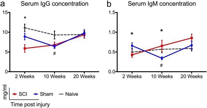 Changes in serum IgG and IgM immunoglobulin levels following cervical SCI. (a, b) Serum IgG and IgM levels declined significantly at 2 weeks post-cervical SCI compared to shams. In rats with cervical SCI, IgG immunoglobulin normalized to sham-levels at later time points. IgM levels were statistically higher in the SCI groups compared to shams at 10 weeks of injury. Naïve rats had significantly higher levels of IgG and IgM antibodies compared to sham rats at 10 weeks. One-way ANOVA with Holm-Sidak's post-hoc test was performed for IgG data (2 weeks), and Kruskal Wallis analysis with Dunn's multiple comparisons post-hoc tests were performed for all other data. * Indicates significant difference between sham and SCI groups, whereas # indicates significant difference between sham and naïve groups. */ # p
