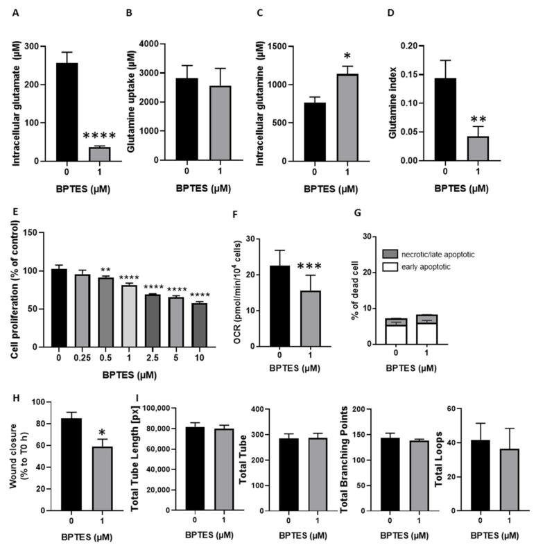 Inhibition of glutamine conversion to glutamate reduced HUVECs proliferation, migration, and respiration without change in apoptosis induction and tube formation. ( A – D ), HUVECs were exposed during 24 h to 10 mM of  l -glutamine-5- 13 C and co-incubated with (or without) BPTES. Intra- and extracellular metabolites were quantified by  13 C NMR spectroscopy ( n  = 5). ( A ), glutamate production from glutamine (intracellular concentration of glutamate) ( B ), glutamine uptake (extracellular concentration of glutamine at T0 minus extracellular concentration of glutamine after 24 h). ( C ), intracellular glutamine concentration. ( D ), glutamine index, (ratio of glutamate production on glutamine uptake). ( E ), proliferation of HUVECs (% of control) treated with increasing doses of BPTES (0–10 µM) ( n  = 4). ( F ), oxygen consumption rate (OCR), measured in HUVECs treated with or without 1 µM of BPTES ( n  = 3). ( G ) percentage of apoptotic and dead HUVECs treated with or without 1 µM of BPTES ( n  = 4). ( H ) percentage of wound closure after 14 h calculated from each T0 counterparts. ( I ) quantitative analysis of specific parameters (total tube length, total number of tubes, total branching point, and total loops) of HUVECs tube formation after 4 h incubation on Matrigel in the presence (or not) of 1 µM of BPTES. Statistical analysis: Paired  t -test ( A – D , F , H , I ), One-way ( E ), or Two-way ANOVA ( G ) (Sidak's multiple comparison test), comparison from control, *  p