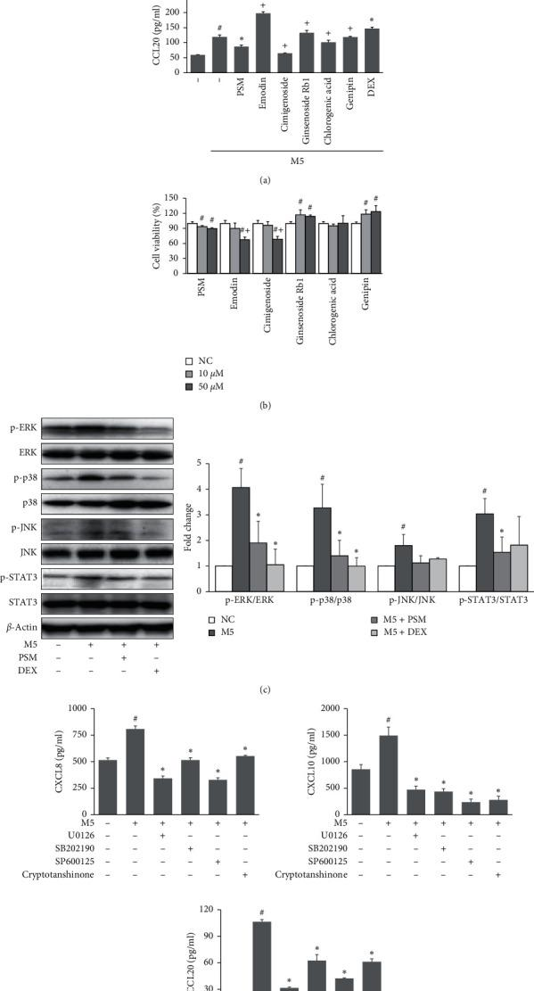 Effects of PSM on the proinflammatory chemokine expression and related signaling pathways in M5-stimulated HaCaT cells. (a) HaCaT cells were pretreated with emodin, genipin, chlorogenic, cimigenoside, ginsenoside Rb1 (10 μ M), PSM (50 μ M), or dexamethasone (DEX, 10 μ M) for 1 h and then stimulated with M5 (IL-1 α , IL-17A, IL-22, oncostatin M, and TNF- α , 10 ng/ml each) for 24 h. The CXCL8, CXCL10, and CCL20 levels in the culture supernatants were determined using commercial ELISA kits. (b) The effects of PSM on cell viability was assessed using an XTT assay. HaCaT cells were treated with emodin, genipin, chlorogenic, cimigenoside, ginsenoside Rb1, or PSM (10, 50 μ M) for 24 h. (c) HaCaT cells were pretreated with PSM (50 μ M) or DEX (10 μ M) for 1 h and then stimulated with M5 for 30 min. Protein expression of p-ERK, p-p38, p-JNK, and p-STAT3 were assessed by Western blotting, and the band intensities were normalized versus ERK, p38, JNK, and STAT3, respectively. (d) HaCaT cells were pretreated with U0126, SB202190, SP600125, and cryptotanshinone (10 μ M) for 1 h and then stimulated with M5 for 24 h. The CXCL8, CXCL10, and CCL20 levels in the culture supernatants were determined using commercial ELISA kits. # P
