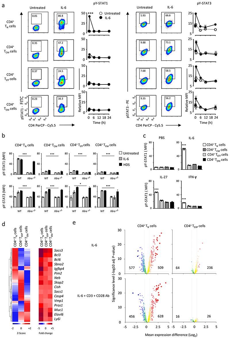 CD4 + T cell subsets show different response to IL-6. (a) Representative flow cytometry analysis of STAT1 and STAT3 responses in naïve (T N ), central memory (T CM ), effector (T Eff ) and effector memory (T EM ) CD4 + T cells after 30 min IL-6 stimulation (20ng/ml). Numbers indicate the percentage of pY-STAT1 or pY STAT3 staining. Temporal changes in pY-STAT1 and pY-STAT3 are shown for each T cell subset following IL 6 stimulation (n=3). (b) Detection of pY-STAT1 and pY-STAT3 in CD4 + T N , CD4 + T CM , CD4 + T Eff and CD4 + T EM cells from WT and IL6ra -/- mice. CD4 + T cells were stimulated for 30 min with an equimolar concentration of IL-6 or an IL-6-sIL-6R fusion protein (HDS) (n=3). (c) Intracellular flow cytometry analysis of pY-STAT1 in CD4 + T cells following 30 min stimulation with IL-6, IL-27 or IFNγ (20ng/ml) (n=3). (d) Microarray expression data is presented for CD4 + T N (n=3), CD4 + T EM (n=3), and in vitro expanded CD4 + effector-like T cells (See Supplementary Fig.2a , CD4 + T EXP ) (n=4) treated with 20ng/ml IL-6 for 6 hours. Analysis was confined to genes displaying both a relative signal intensity of > 150 and > 1.5-fold alteration in expression following IL-6 treatment ( P