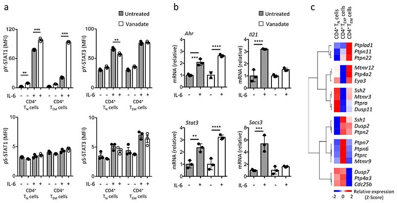 Induction of protein tyrosine phosphatases following T-cell activation limits STAT1 signalling. (a) CD4 + T N and CD4 + T EM cells were pre-treated for 5 min with 5mM sodium orthovanadate (vanadate) prior to IL-6 (20ng/ml) stimulation for 30 min. Changes in pY-STAT1 and pY-STAT3 activity were monitored by intracellular flow cytometry (MFI). A comparable analysis of pS-STAT1 and pS-STAT3 is shown as a control (n=3). (b) Quantitative PCR for <t>Ahr</t> , Il21 , Stat3 and Socs3 after vanadate pre-treatment and 20ng/ml IL-6 stimulation in CD4 + T EM cells (n=3). (c) Heatmap analysis of Affymetrix transcriptomic data identifies the top 20 genes ( P