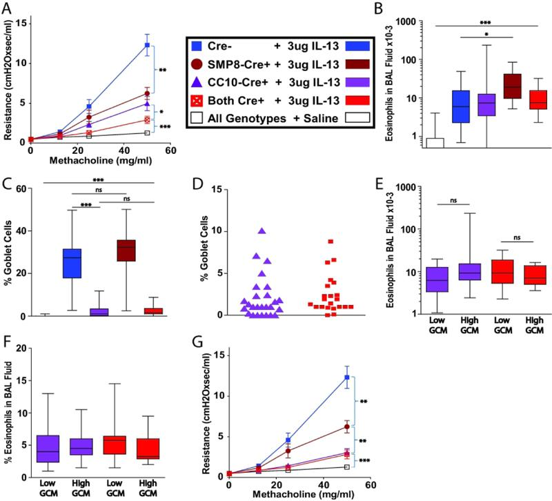 IL-4Rα-expression by epithelial cells (ECs) and smooth muscle cells (SMCs) is required in IL-4Rα flox/− mice for maximal airway hyperresponsiveness (AHR) induced by exogenous <t>IL-13.</t> IL-4Rα flox/− mice were treated i.t. with 3 µg of IL-13 daily for 7 days. A. Invasive measurement of AHR. B. Absolute eosinophil count of BAL fluid. C. Quantitation of goblet cell metaplasia (GCM). D. Distribution of residual GCM in club cell 10 kDa protein-Cre + (CC10-Cre + ) mice and CC10-Cre + α-smooth muscle actin-Cre + (SMP8-Cre + ) mice. E. Absolute eosinophil count of BAL fluid in CC10-Cre + and CC10-Cre + SMP8-Cre + mice that had high or low residual GCM. F. Percentage of eosinophils in BAL fluid in CC10-Cre + mice and CC10-Cre + SMP8-Cre + that had high or low residual GCM. G, AHR when CC10-Cre + and CC10-Cre + SMP8-Cre + mice that had high residual GCM were excluded. The results represent 12 pooled experiments with panels A-D showing 17, 14, 26, 22 and 47 mice for groups: Cre − + IL-13, SMP8-Cre + + IL-13, CC10-Cre + + IL-13, Both Cre + + IL-13, all genotypes + saline, respectively. Panel G represents 14 and 12 mice for groups: CC10-Cre + + IL-13 and both Cre + + IL-13, respectively. NS, not significant; *, p