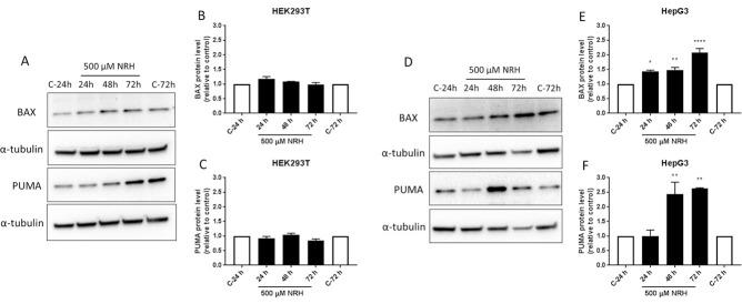 NRH induced PUMA and BAX-mediated apoptosis in HepG3 cells. Apoptosis in HEK293T and HepG3 cells were assessed using immunoblot after 24, 48, and 72 h of NRH exposure. Non-significant increases in the BAX and PUMA protein expression levels were observed in HEK293T cells (A). However, significantly increased expression of the apoptotic markers, BAX and PUMA were observed in HepG3 (D). The graph shows the protein expression levels relative to controls in HEK293T (B and C) and in HepG3 (E and F) cells. Results are expressed as the average of at least two biological replicates ± SEM. Statistical significance: * P
