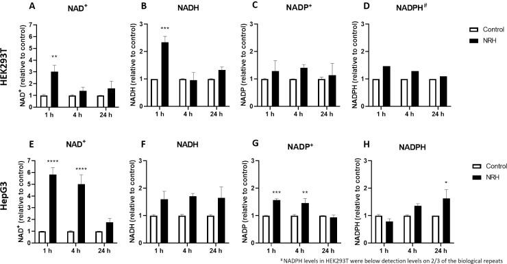 NRH exposure altered NAD(H) and NADP(H) in <t>HEK293T</t> and HepG3 cells. Measurements of (A) NAD + , (B) NADH, (C) NADP + and (D) NADPH in HEK293T cells; (E) NAD + , (F) NADH, (G) NADP + and (H) NADPH in HepG3 cells exposed to media (control) and 100 μM NRH for 1, 4, and 24 h. Results are expressed as the average peak values relative to control ± SEM calculated from three biological replicates. Statistical significance: * P