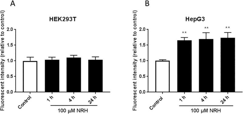 NRH increased mitochondria-derived superoxide formation in HepG3 but not in HEK293T cells. Cellular mitochondrial superoxide production was assessed by measuring the fluorescent intensity of MitoSOX Red in untreated and 100 μM NRH exposed (A) HEK293T and (B) HepG3 cells. Results are presented as mean fluorescence intensity relative to the control ± SEM of three independent experiments. Statistical significance: ** P