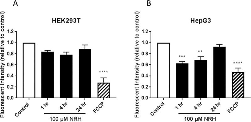 NRH exposure altered mitochondrial membrane potential (ΔΨ m ) in HepG3 but not in HEK293T cells. Mitochondrial membrane potential was assessed by measuring the mean fluorescent intensity of TMRE (plate assay) in NRH exposed (A) HEK293T and (B) HepG3 cells. FCCP uncouples the membrane potential resulting in loss of fluorescence signal and is thus used as a control. The graph represents the mean fluorescence intensity of three independent experiments normalized for cell number variations (see the Materials and Methods section) ± the SEM. Statistical significance: * P