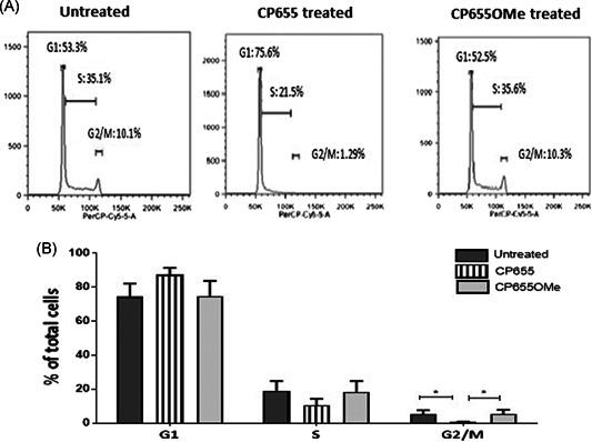 Cell cycle arrest of CD4+ T cells following CP655 (7‐diethylamino‐ N ‐((5‐hydroxy‐6‐methyl‐4‐oxo‐1,4‐dihydropyridin‐3‐yl)methyl)‐ N ‐methyl‐2‐oxo‐chromen‐3‐carboxamide) treatment. CD4+ T cells were isolated from fresh peripheral blood mononuclear cells of healthy donors. Cells were either left unstimulated or stimulated with 1:5 bead:cells ratio of anti‐CD3/CD28 beads in the presence or absence of either CP655 (5 µM) or CP655OMe (5 µM) for 48 hours. Cells were lysed with cold 100% ethanol and stained with propidium iodide and ribonuclease A, before analysis by flow cytometry. A, Representative Fluorescence‐activated cell sorting results from one experiment. B, Cumulative data showing cell cycle arrest of CD4+ T cells from n = 4 donor. Results shown as mean ± standard error of the means. * P