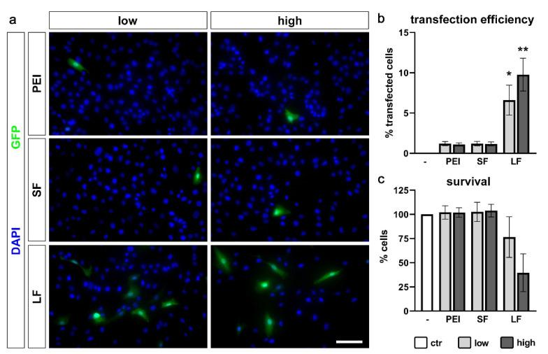 Transfection efficiency of PDL-hTERT cells. Cells were transfected with PEI, SuperFect (SF) and Lipofectamine 2000 (LF) in low and high amounts. ( a ) Representative images of GFP-positive transfected cells (green) and DAPI-stained nuclei of all cells (blue). Scale bar: 100 µm. ( b ) Quantification of transfection efficiency. GFP-positive transfected cells per field of view were set in relation to the number of DAPI-positive cell nuclei per field of view and are presented as % ±SEM. Untransfected cells served as control (ctr). ( c ) Cell viability was calculated by counting DAPI-positive nuclei per field of view and set in relation to DAPI-positive nuclei per field of view of untransfected cells (ctr) and are presented as % ±SEM. n = 3 biological replicates performed as triplicates with three analyzed photographs per singlet. * 0.01 ≤ p