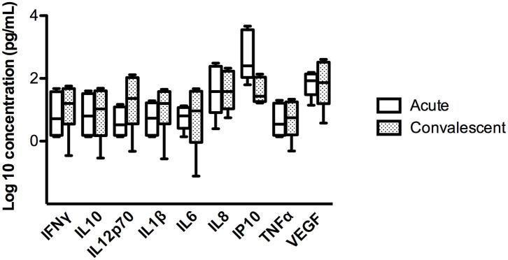 Comparison of concentration of different cytokines in four ANDV-infected cases in acute stage and convalescent stage. Concentrations are represented in pg/mL of INFγ, IL10, IL12p70, IL1β, IL6, IL8, IP10, TNFα, and VEGF. Clear boxes represent values in acute stage and dark boxes values in convalescent stage; whiskers represent minimum and maximum values and horizontal bars in the box the median value (Wilcoxon rank test, p