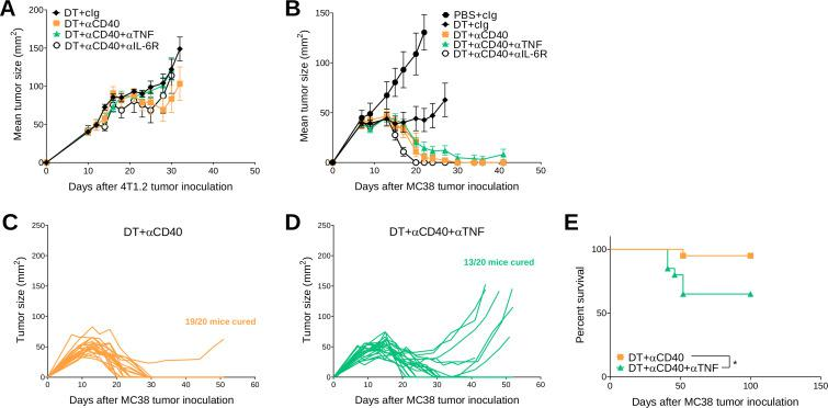 Concomitant anti-TNF negatively impacts antitumor efficacy of DT+ anti-CD40 treated MC38 tumor-bearing mice. (A, B) From the same experiments as described in figure 3 (A) 4T1.2 or (B–E) MC38 tumor growth curves. (A) Mean tumor size represented as mean±SEM (n=6/group). Data representative of two experiments. (B) Mean tumor size represented as mean±SEM (n=5–7/group). Experiment performed once. (C, D) In a similar treatment protocol as figure 4B, individual tumor growth curves of MC38 tumor-bearing mice treated with (C) DT+ anti-CD40 or (D) DT+ anti-CD40+ anti-TNF are shown (n=20/group). (E) Corresponding survival of pooled experiments from B to D. Statistical comparisons between the indicated groups were performed with a log-rank analysis, respectively, *p
