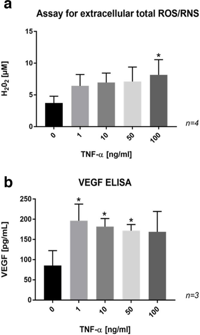 a) Bar chart showing a dose-dependent increase in the formation of extracellular reactive oxygen and nitrogen species (ROS/RNS) by SaOs-2 cells treated with tumour necrosis factor-alpha (TNF-α) for 24 hours. b) Bar chart showing enhanced release of vascular endothelial growth factor (VEGF) in the culture medium of SaOs-2 cells treated with TNF-α for 24 hours. Data are presented as the mean ± SD. *p