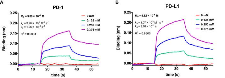 Global kinetic analysis of cosmosiin binding to biotinylated (A) PD-1 and (B) PD-L1 immobilized on a streptavidin biolayer interferometry (BLI) sensor. The kinetics of cosmosiin for immobilized PD-1 and PD-L1 were monitored with increasing concentration of cosmosiin (0, 0.125, 0.25, and 0.375 mM), dissolved in PBS buffer (pH 7.3) containing 1% DMSO.