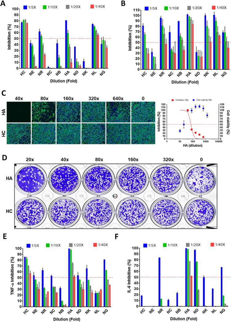 Pharmacological data of single herbs of NRICM101. ( A ) Interaction of spike RBD to the ACE2 was determined by the ACE2-spike protein inhibition ELISA. ( B ) Inhibition of SARS-CoV-2 3CL protease activity. ( C ) Inhibition data of the immunofluorescent assay of HA and HC. ( D ) Plaque reduction neutralization test of HA and HC. ( E,F ) Inhibition data of LPS-induced expression of TNF-α and IL-6 in murine alveolar macrophages. The red dots indicate 50 % inhibition of 3CL protease activity. The data represented as mean ± SD from three independent experiments. 50 % inhibition concentration (IC 50 ) and 50 % cytotoxic concentration (CC 50 ) were calculated by Prism software.
