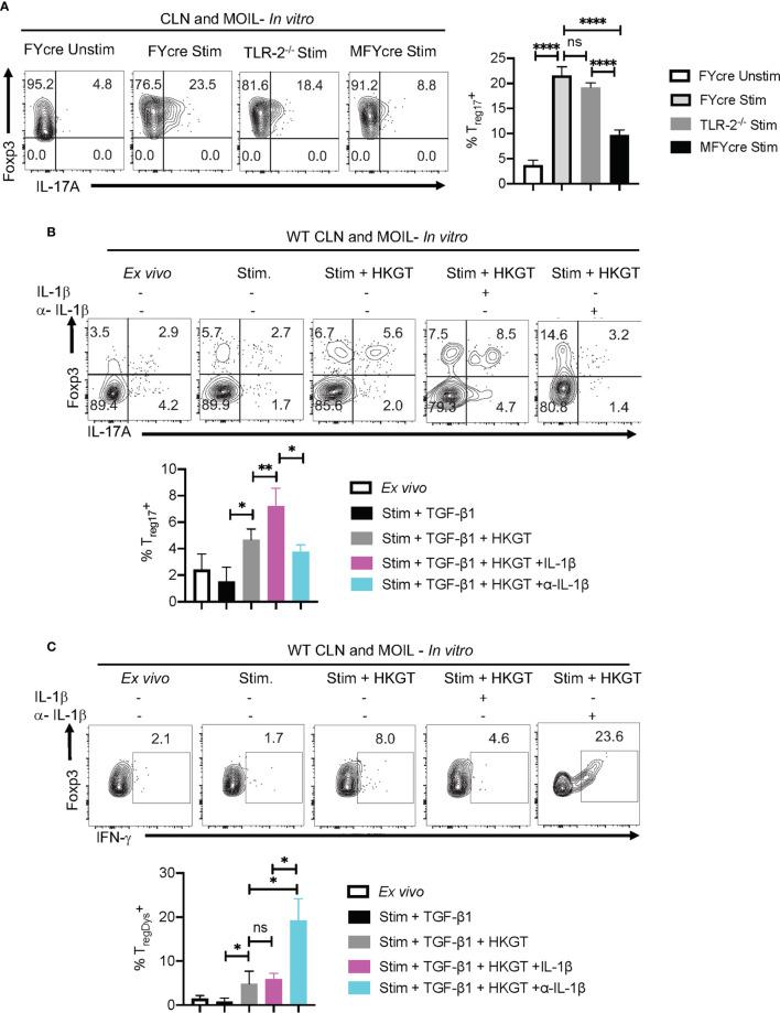 IL-1β promotes T reg 17 cells and constrains induction of T regDys cells in Candida activated oral mucosal cells in vitro . (A) HKGT mediated T reg 17 induction is slightly reduced in TLR-2 -/- T regs , but significantly lower in MFYcre T regs in vitro . Pooled cervical lymph nodes (CLN) and mouse oral intra-epithelial and lamina propria leukocytes (MOIL) cells from FYcre and MFYcre were stimulated with heat killed Candida albicans germ tube (HKGT) as in Figure 1C for 5 days and were restimulated with PMA-Ionomycin for flow cytometry assessment. For TLR-2 -/- cultures, T regs were purified from TLR-2 -/- mice and stimulated with WT APC from T cell depleted CLN and MOIL cells. Flow cytometry plots showing Foxp3 and IL-17A expression (gated on CD3 + CD4 + Foxp3 + cells). (B, C) WT CLN and MOIL cells were examined ex vivo or stimulated with HKGT as in Figure 1C , in the presence of IL-1β (10 ng/ml) or α- IL-β antibody (10 μg/ml) for 5 days. Flow cytometry plots showing Foxp3 and IL-17A expression (gated on CD3 + CD4 + cells) ( B , top) and statistical data points from experimental replicates ( B , bottom). Flow plots showing Foxp3 and IFN-γ expression (gated on CD3 + CD4 + Foxp3 + cells) (C) and statistical data points from experimental replicates ( C , bottom). NS, non-significant. *P