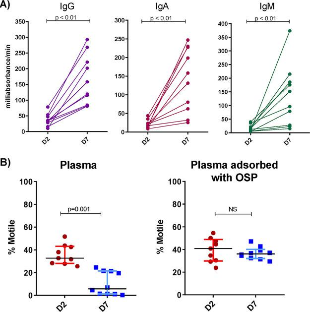 Convalescent-phase plasma of cholera patients recognizes V. cholerae OSP and inhibits V. cholerae motility in an OSP-dependent manner. (A) IgG, IgA, and IgM plasma responses targeting V. cholerae O1 Ogawa OSP at the acute (D2) and convalescent (D7) phase of cholera ( n = 10) as determined by enzyme-linked immunosorbent assay. (B) Motility of V. cholerae O1 Ogawa O395 assessed by high-speed video microscopy after a 5-min incubation with a subagglutinating dilution of plasma (1:256) of cholera patients ( n = 10) at a bacterial OD 600 of 0.1. Percentages of motile versus nonmotile bacteria after incubation with heat-inactivated plasma with and without adsorption with V. cholerae OSP are shown. Bars show the medians with interquartile ranges. Differences within groups were assessed using the Wilcoxon matched-pairs signed-rank sums test. D2, day 2; D7, day 7; OSP, O-specific polysaccharide.