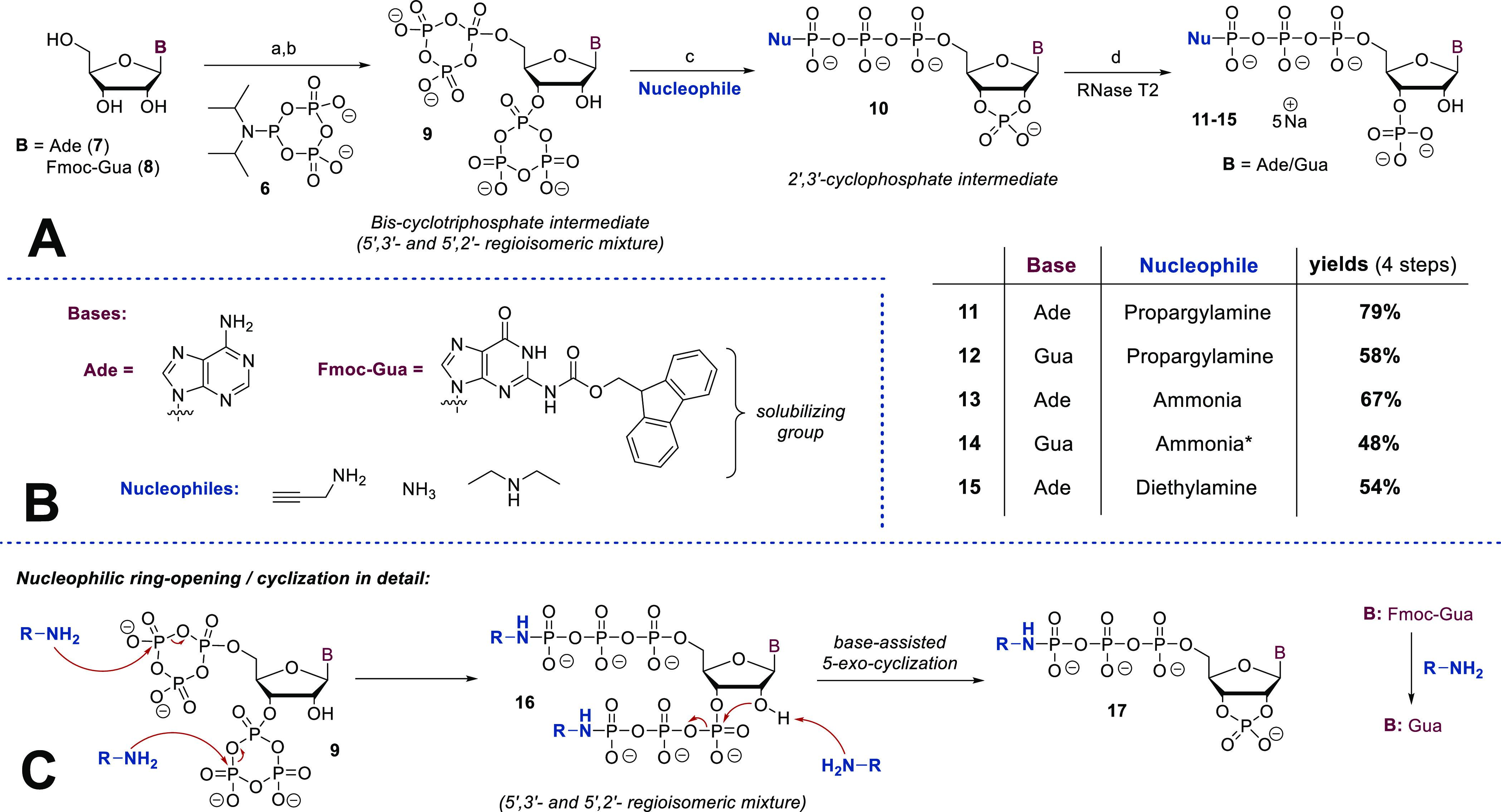 Regioselective Tetraphosphorylation of Nucleosides Using cPyPA ( 6 ) and RNase T2 Synthetic details: (a)  6  (5.0 equiv), ETT (12 equiv), DMF, rt, 45 min; (b)  m CPBA (7.5 equiv), 0 °C, 10 min; (c) amine (150 equiv); (d) RNase T2, H 2 O, 37 °C, 3–48 h. (*) In the case of  14 , a mixture of ammonia and diazabicycloundecen (DBU) was applied.
