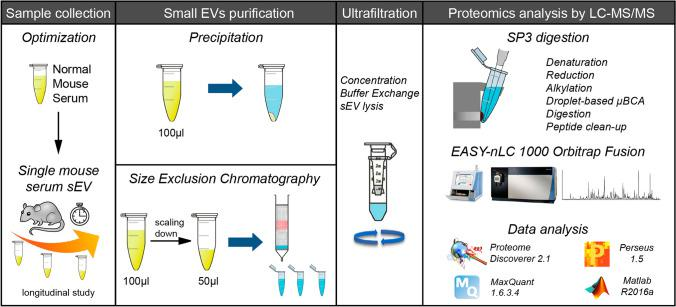 Experimental workflow. Comparison between two sEV isolation procedures: precipitation (PPT) and Size Exclusion Chromatography (SEC) using 100 µl of mouse serum. SEC was then scaled down on vesicles isolated from 50 µl of serum. As a proof of concept, the ultrasensitive microproteomics workflow was then applied to a longitudinal study of a glioblastoma multiforme mouse model. Purified sEV's were concentrated and lysed on protein concentrator spin filters; then extracted, quantified and digested with a modified SP3 protocol. Peptides were analyzed by nLC-MS/MS, and the data analyzed with Proteome Discoverer 2.1 and MaxQuant software. Statistical analysis was performed using Perseus and Matlab.